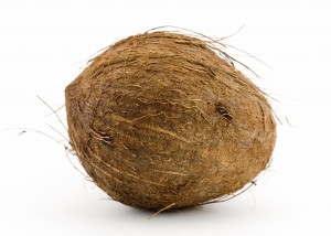 Coconut_Large