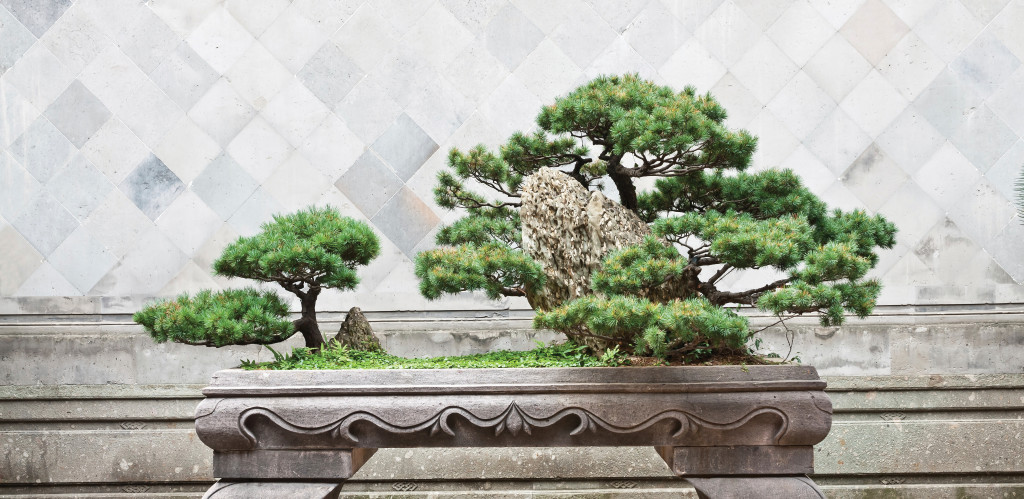 The Cancer Journey as Reflected in the Japanese Art of Bonsai